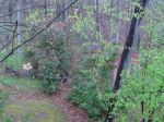 Rainy back yard view,  Falmouth, VA