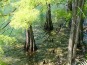 Water trees and  Shadows