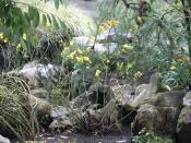 Wild Flowers, Shenandoah National Park,  VA