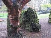 tree & rocks, Portland, OR