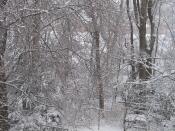 light snow, the back yard, home, Falmouth, Va