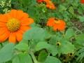 Flowers, front garden, home, falmouth, va