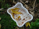 Leaves in a soap dish in front garden,  home, falmouth, va