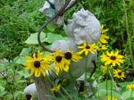 Black Eyed Susans, Front Garden, Home, Falmouth, VA
