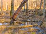 abandoned beaver pond  , Falmouth, VA