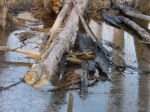 log in pond in winter, Falmouth, Virginia, US