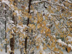 snow in woods in winter, Falmouth, Virginia, US